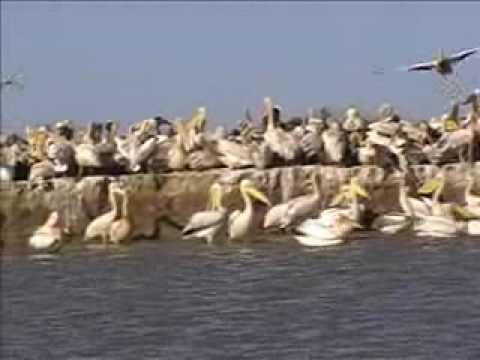 Réserve naturelle du DJOUJ au Sénégal